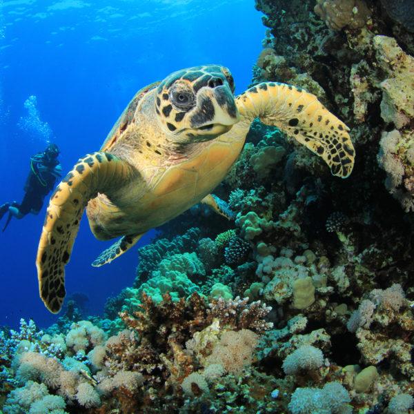 Caribe Naturaleza Viva