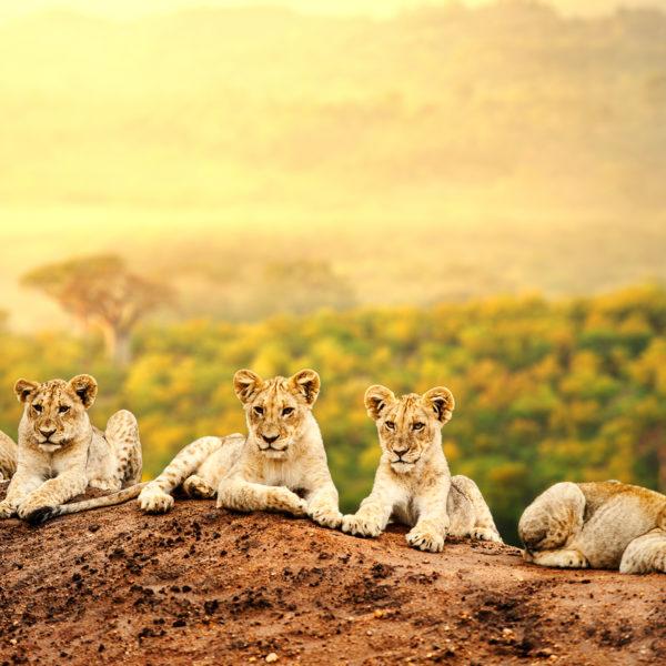 Safari en Africa