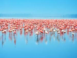 Safari al Lago Naivasha