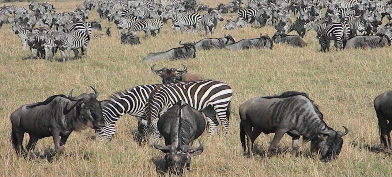 Kenia Safari Samburus y Masais