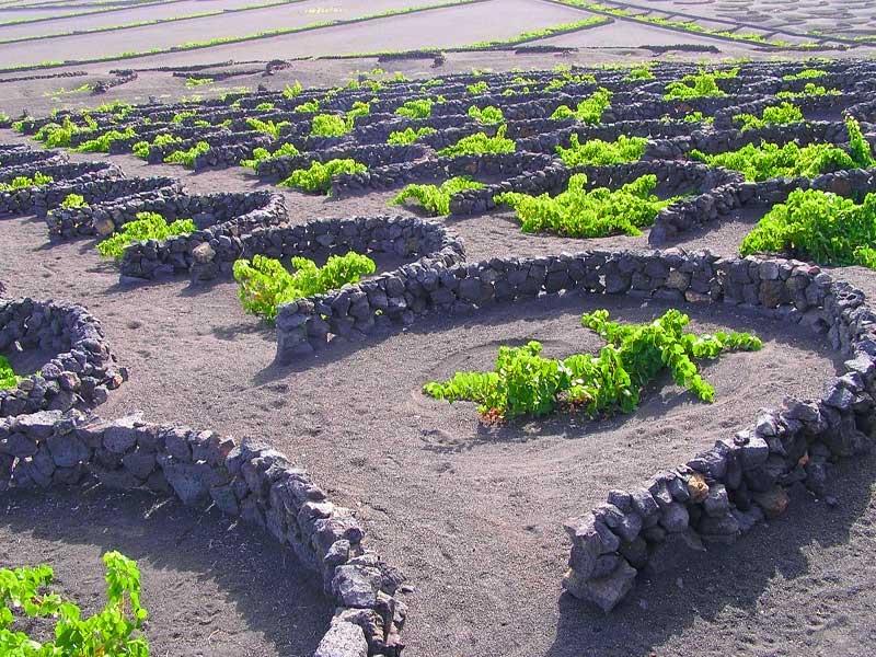 Excursión al Norte de Lanzarote Visitas de las viñas