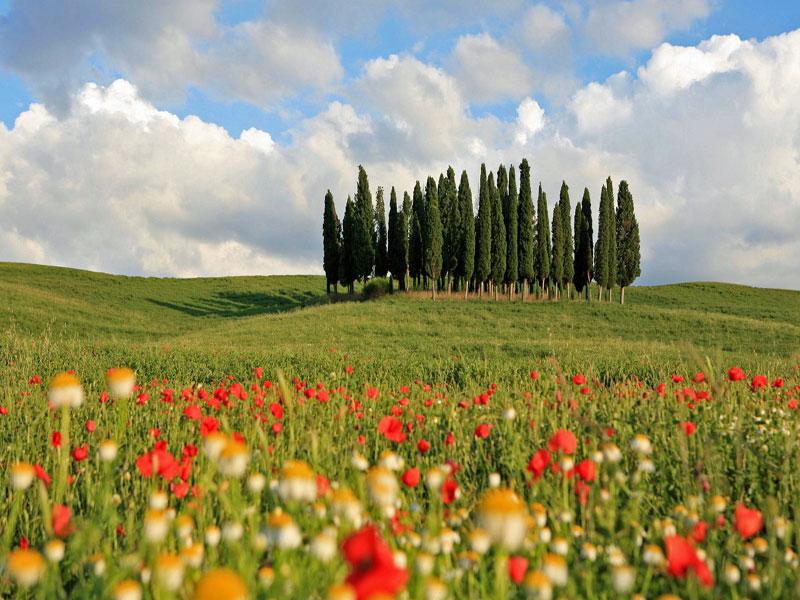 Viaje en grupo por la Toscana donde descubrir sus mil colores, su historia,