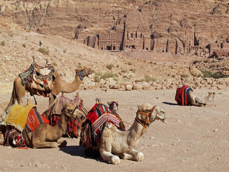 Solteros viajeros en Petra
