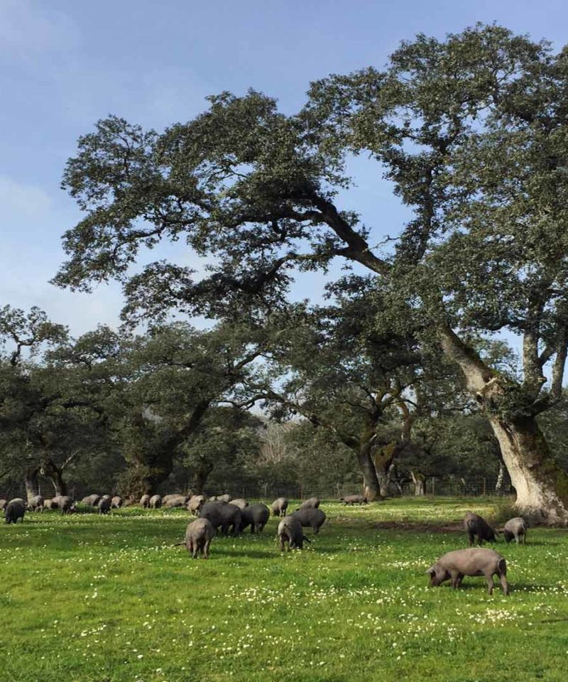 Aventura y senderismo en Fin de Año - Huelva y Portugal