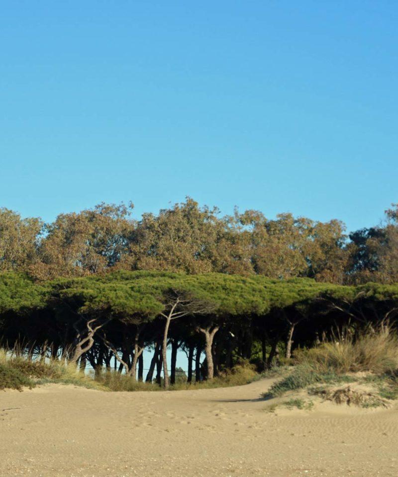 Aventura en Andalucía y Portugal 5 días Puente Los Santos y Reyes