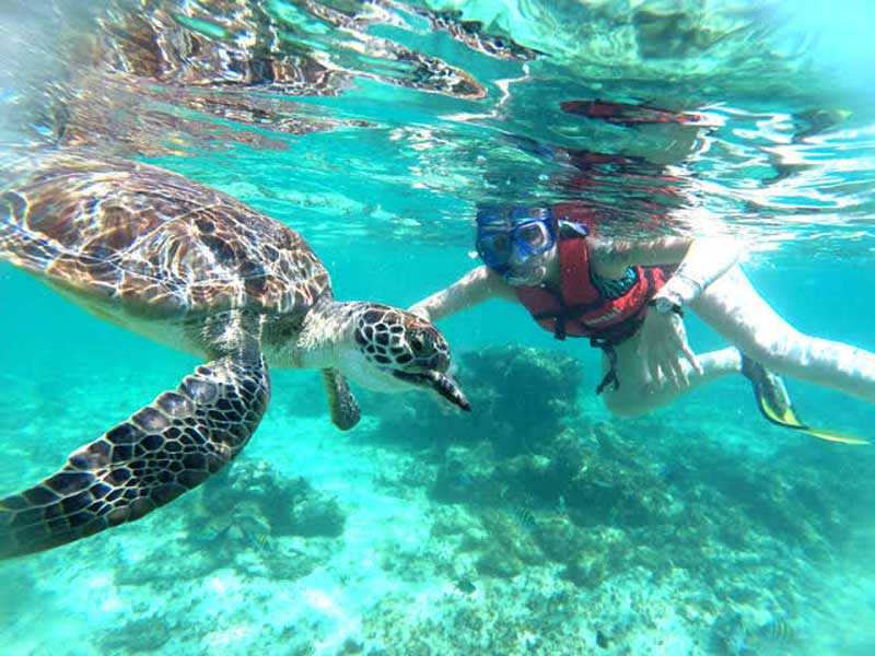 Snorkel arrecifes de Coral