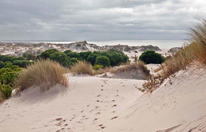 Parques Naturales y Observación de Aves - Parque de Donana