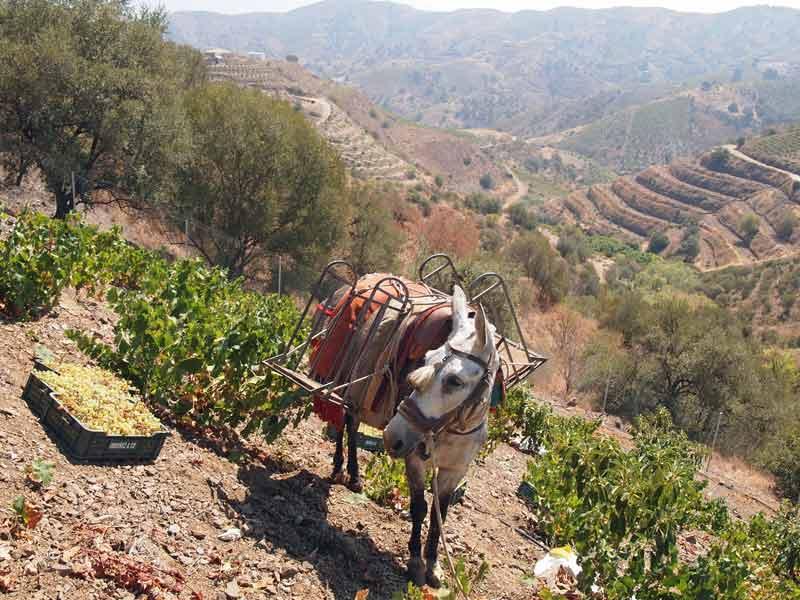 Singles en ruta del vino