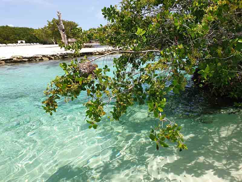 Tres Rios en Yucatan singles