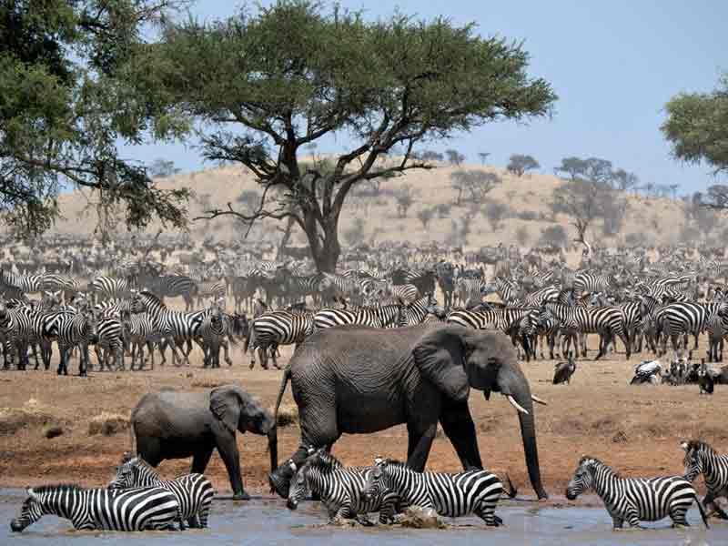 Singles en Serengeti